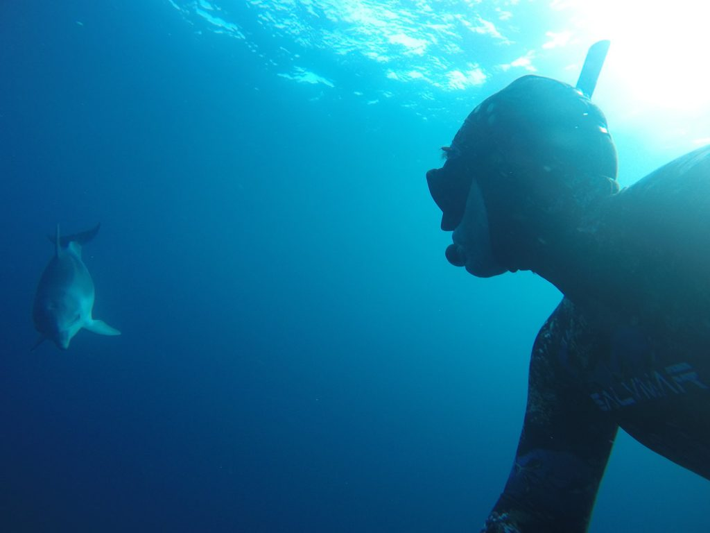 Apnée dauphin école internationale d'apnée