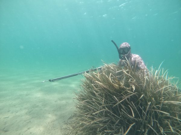 Stage chasse sous-marine